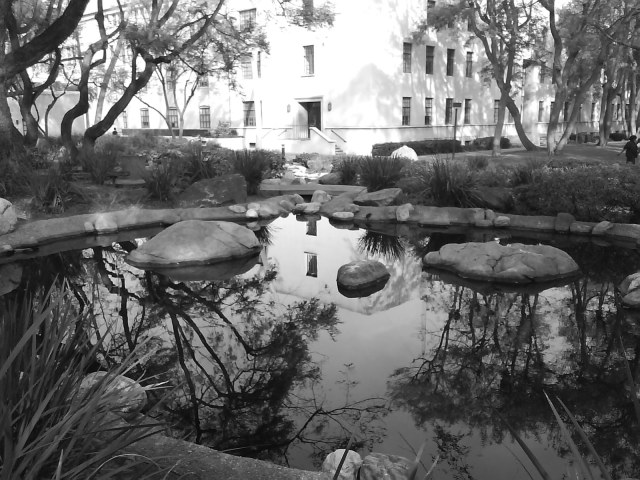 30 Minutes Wandering Caltech January 2012 Image Five